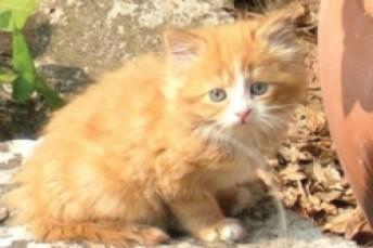 Ann's Kitten